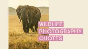 Wildlife Photography Quotes